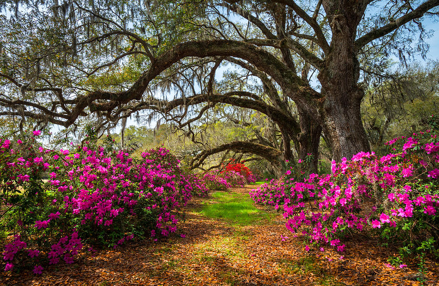charleston-sc-spring-flowers-scenic-landscape-south-carolina-dave-allen
